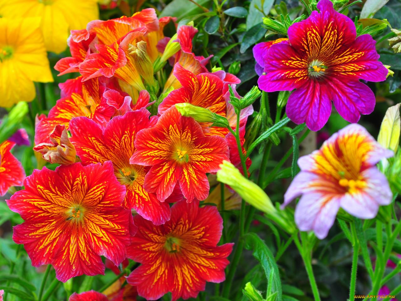смотреть фото садовых цветов с названием звеньев способ